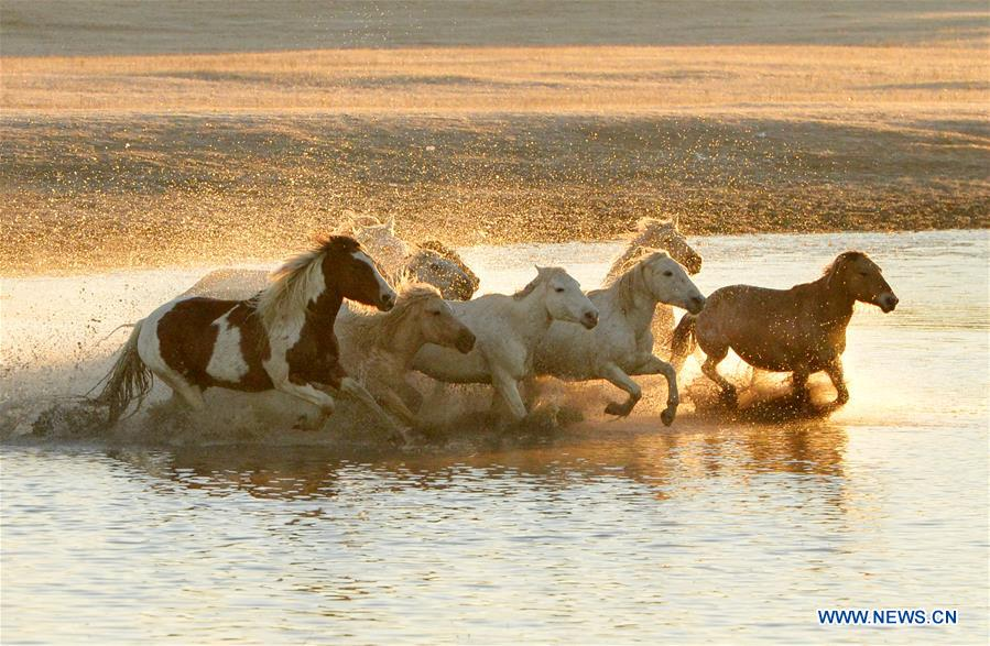 Galloping through China's oldest horse farm
