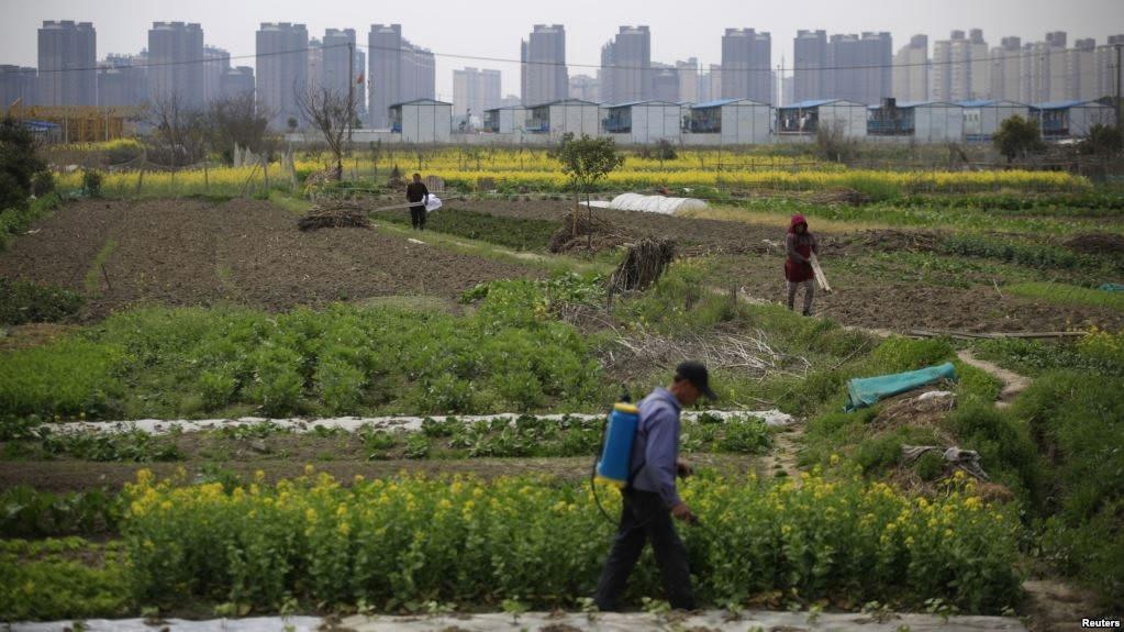 China allocates 1.4 bln yuan for rural pest control