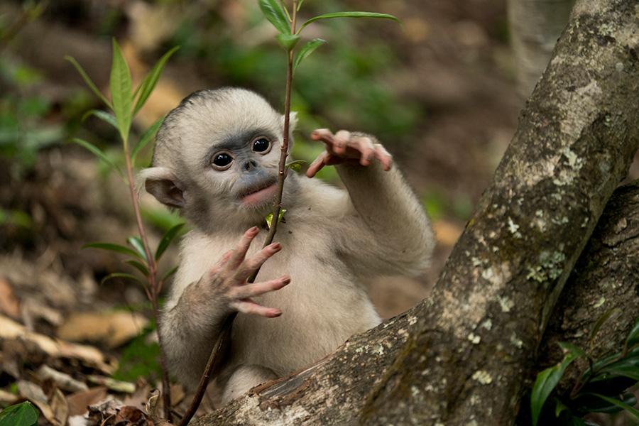 Nature photographer dedicates life to conservation