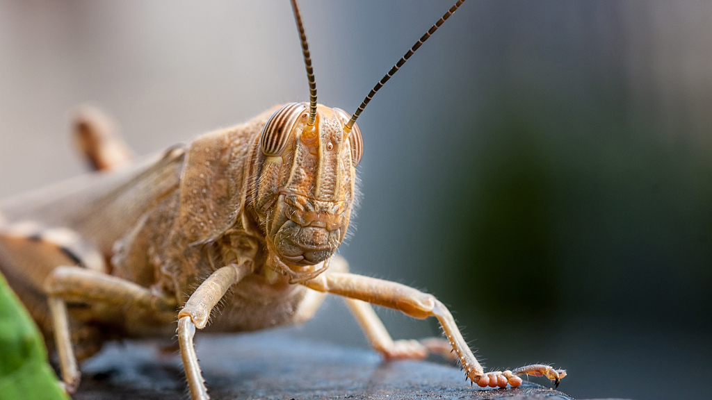 India says locust swarms under control after ravaging crops
