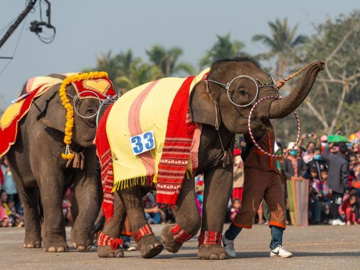 Elephant Festival 2020 held in Xayaboury, Laos