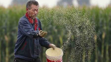 Xi stresses agricultural development for epidemic control, economic and social growth