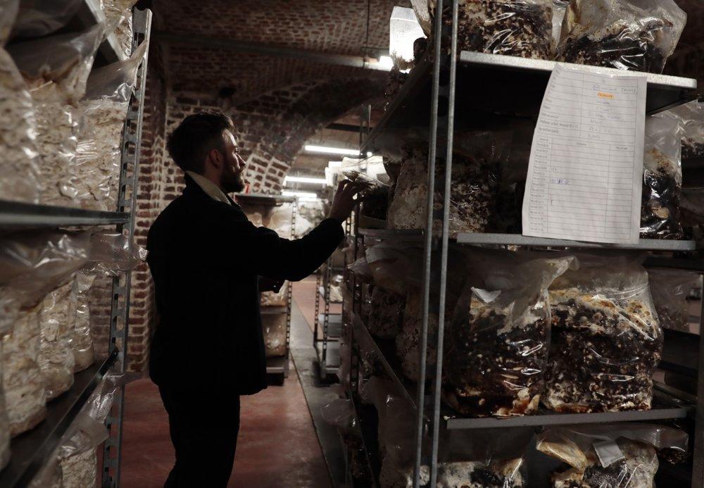 Mushrooms grow from beer waste in the cellars of Brussels