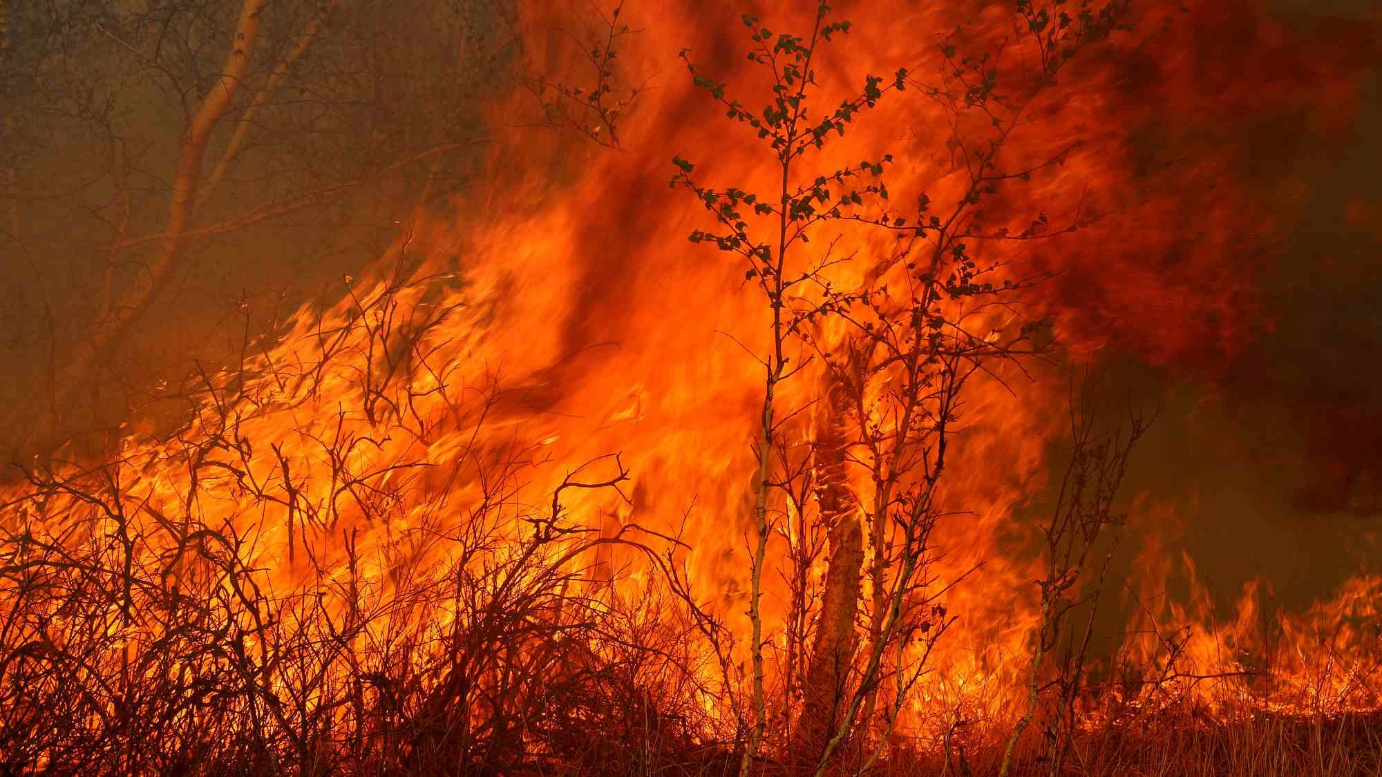 Forest fire razes 8,350 hectares of land in Chile