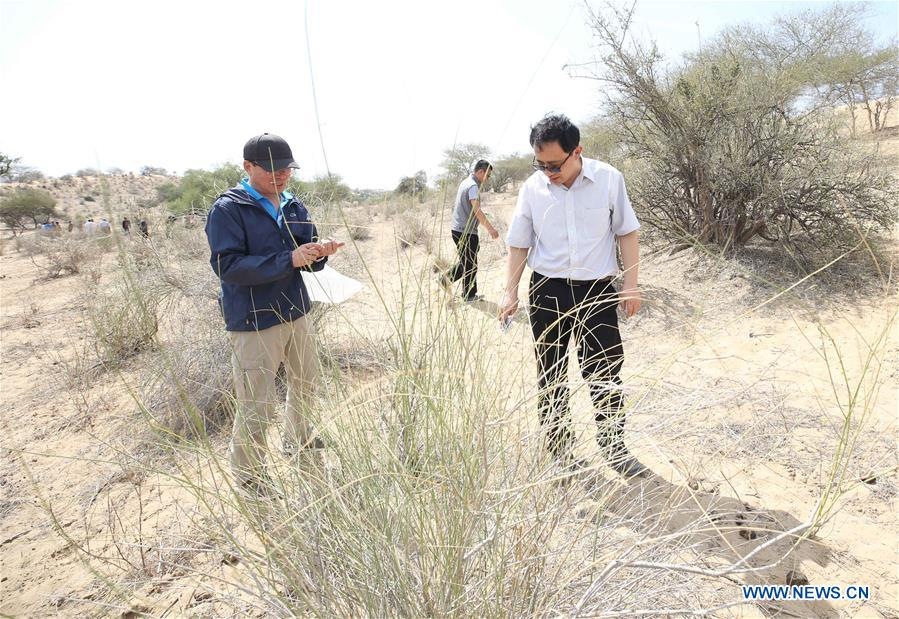 Chinese locust experts check locust siuation in Tharparkar desert, Pakistan