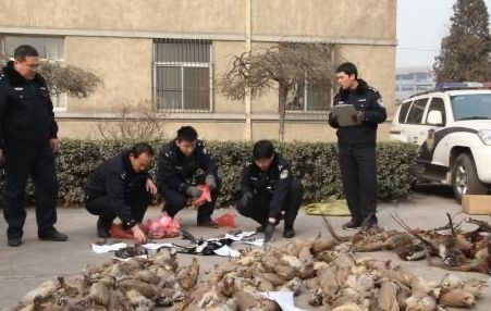 Chinese police to strengthen crackdown on wildlife crime: official