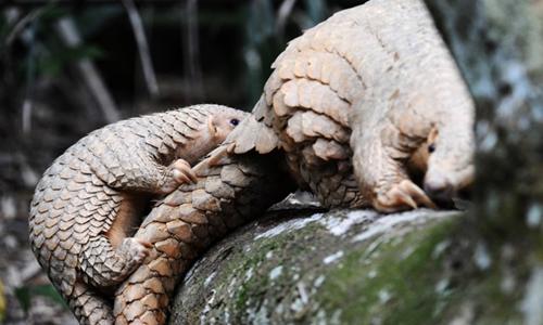 Shenzhen drafts blacklist on wild animal consumption amid COVID-19 epidemic