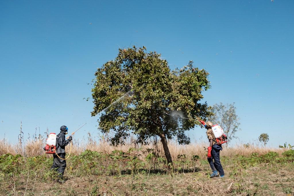 Uganda launches aerial spraying of desert locusts