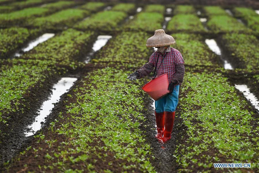 Farmers busy with agricultural production in Haikou