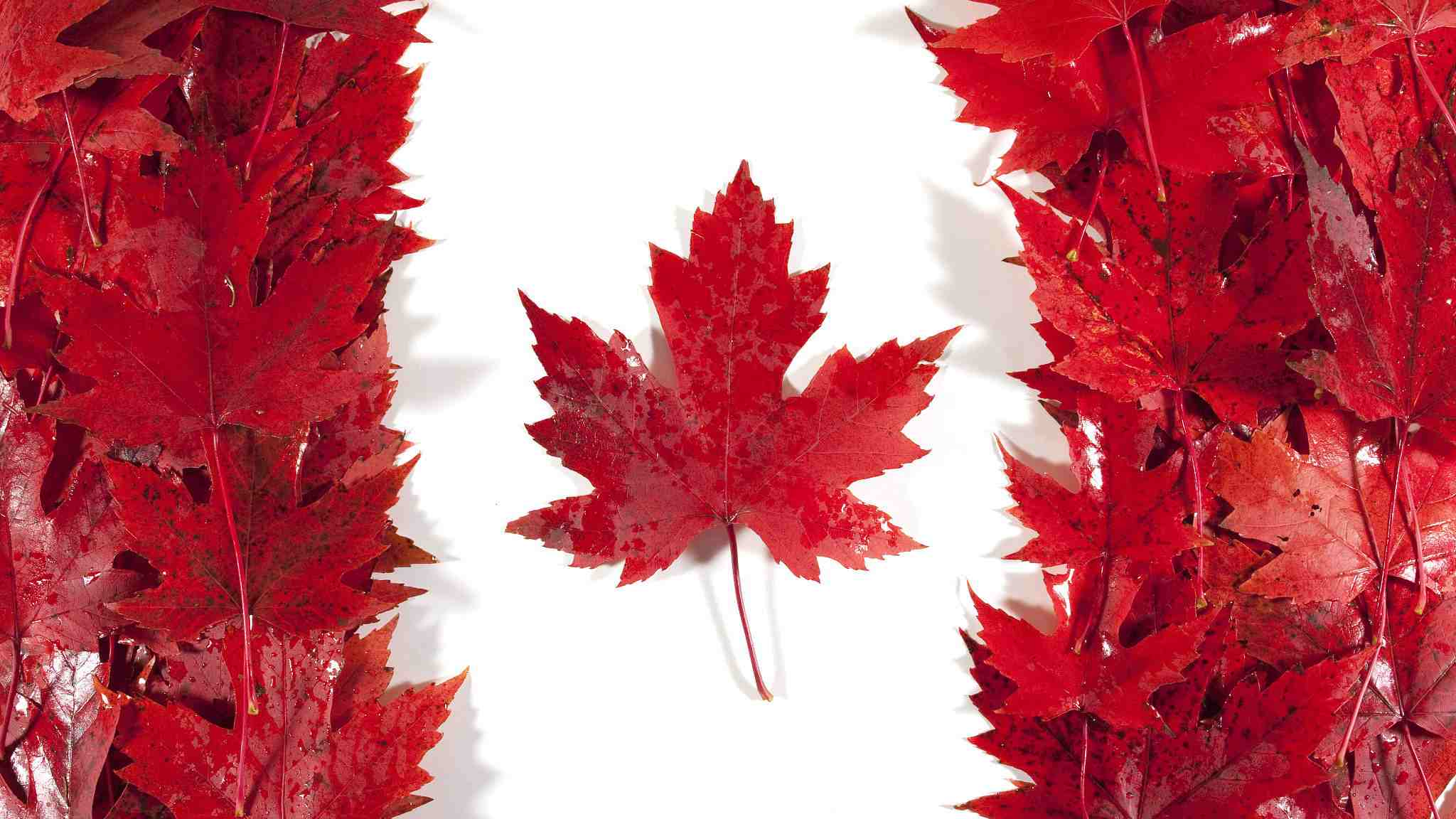 Canada's industrial product, raw materials prices down in January