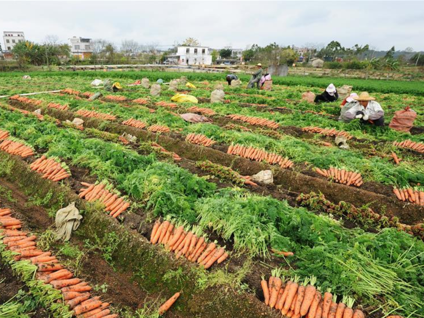 Farmers across China busy carrying out agricultural production as weather warms up