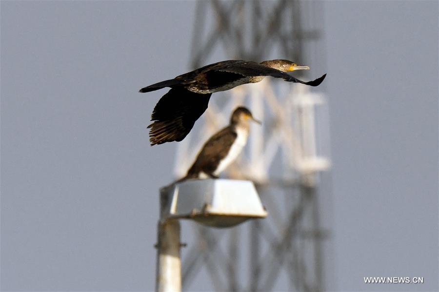 Bird flies over waters in Kuwait City