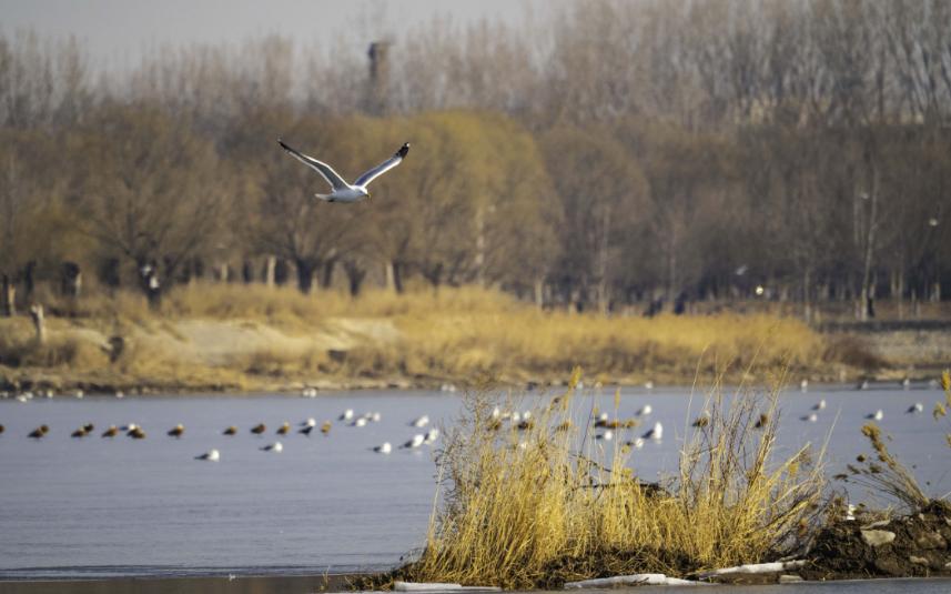 Beijing strengthens monitoring of wildlife
