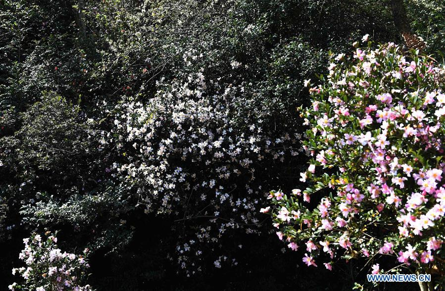 Blooming flowers seen on mountain in Yunnan