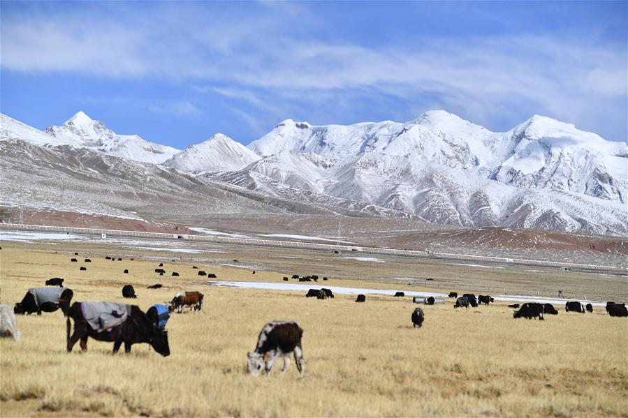 Snow scenery in SW China's Tibet