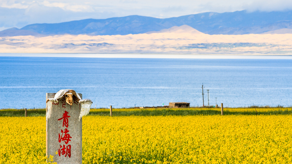 China's largest saltwater lake sees better ecosystem: report