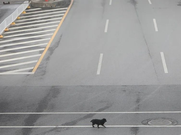 How stray animals survive amid outbreak