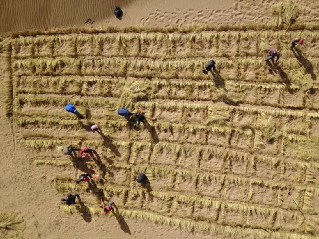 Three generations in Gansu make efforts to curb desertification