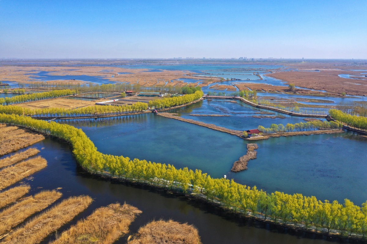 Xiongan New Area to plant over 6,600 hectares of trees in 2020
