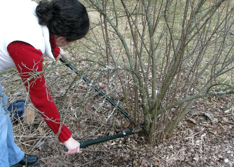 March is a great time to prune many shrubs, but not all
