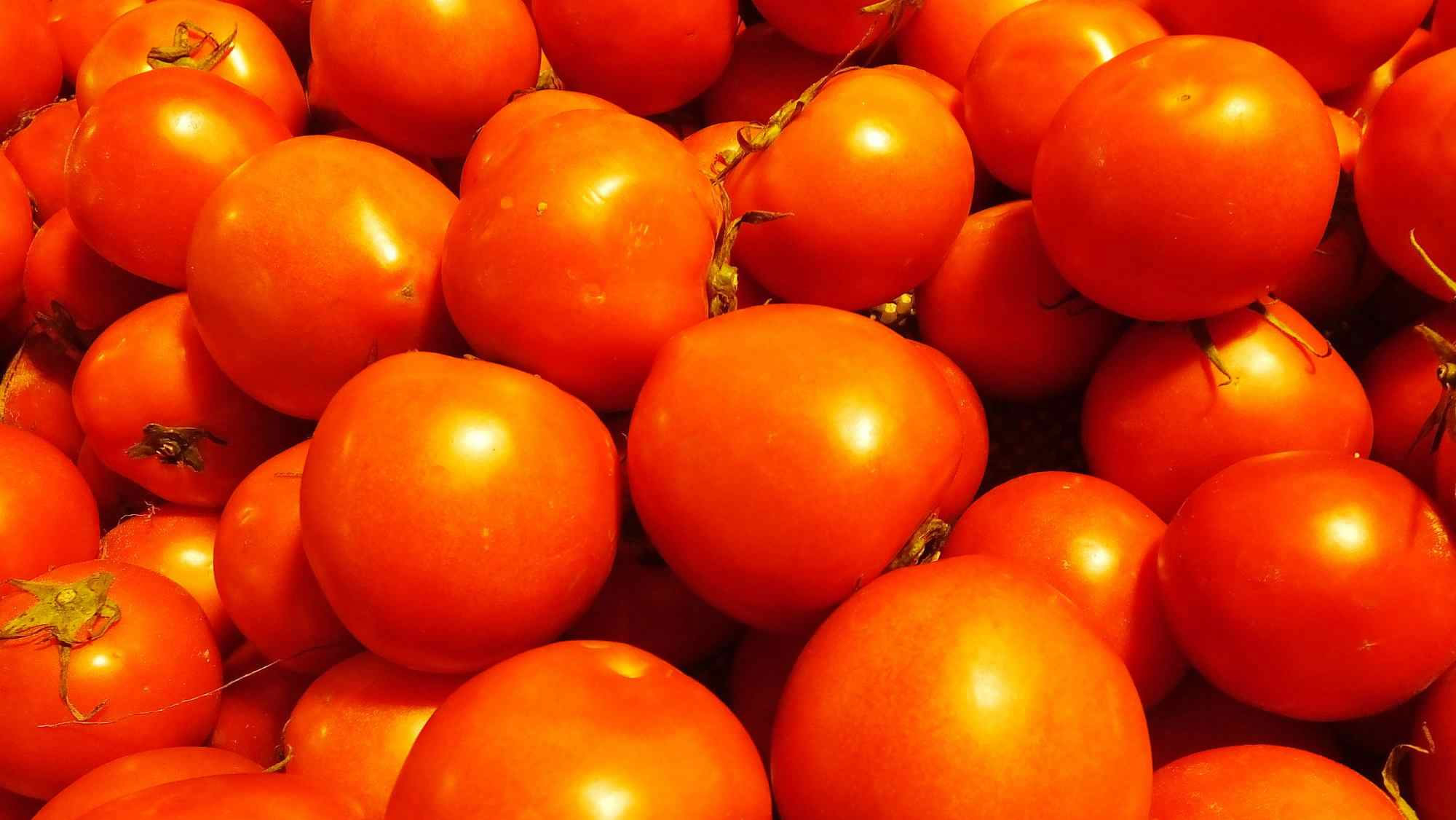 Planting greenhouse tomatoes helps thousands escape poverty