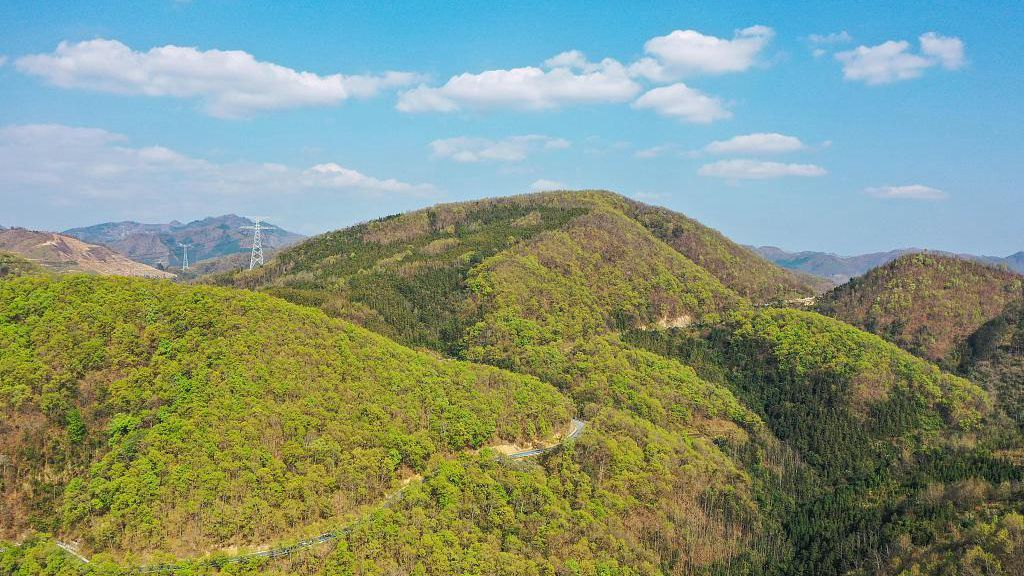 China's Arbor Day maintains momentum amid outbreak