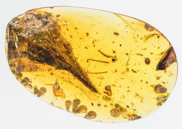 Scientists discover smallest dinosaur of all time