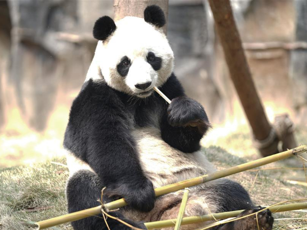 Employees in Wuhan Zoo stick to posts with feeding and disinfection work for animals