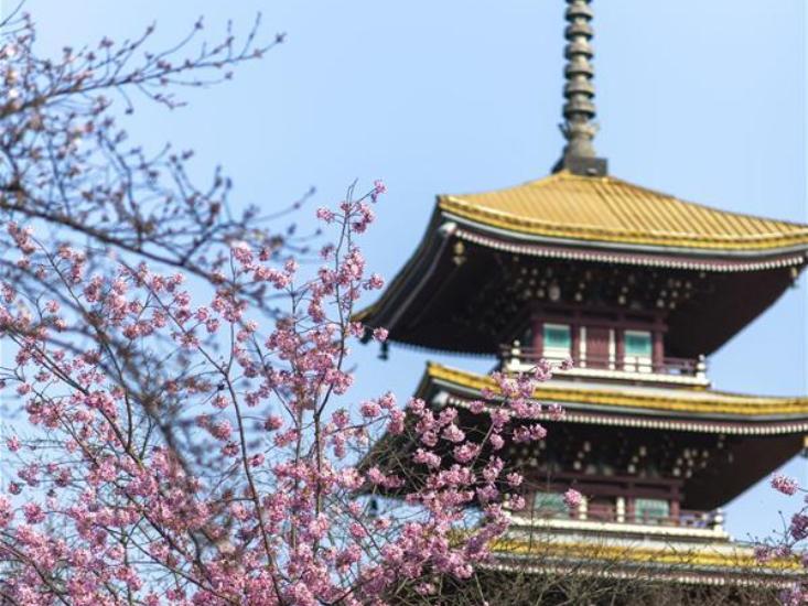 Spring scenery in Wuhan
