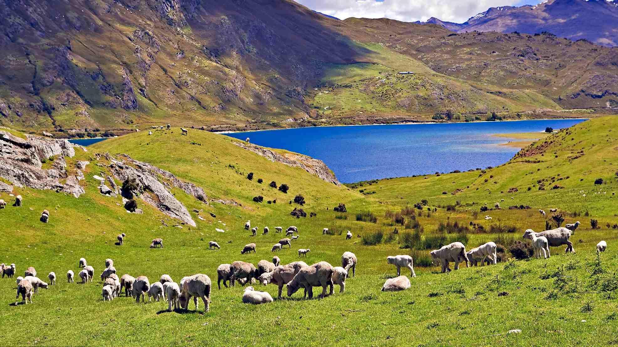 New Zealand slashes rates amid virus recession fears, market shrugs