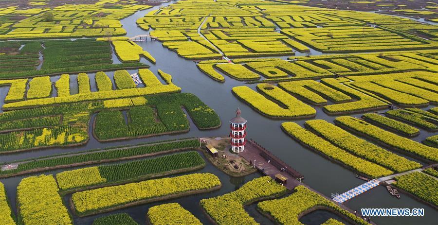 Scenery of cole flowers in Jiangsu