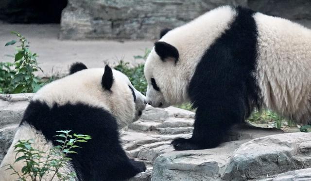 Beijing Zoo will open next week