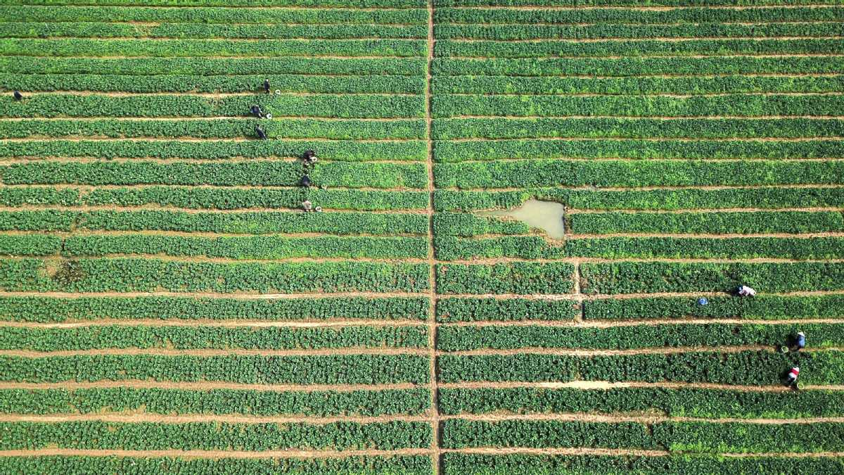 Spring plowing in full swing in Guizhou, Southwest China