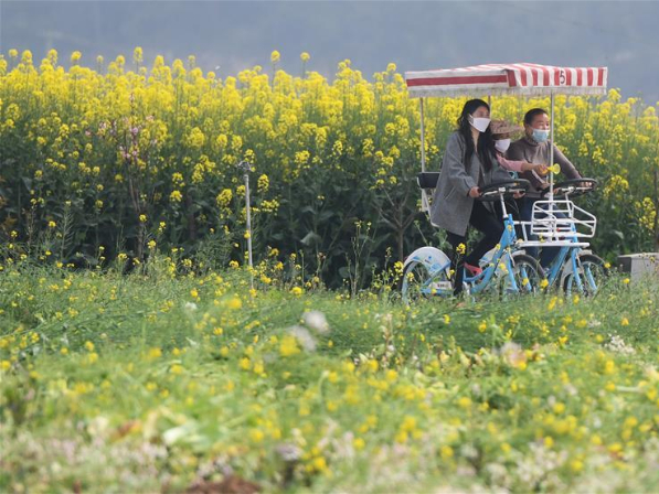Agriculture production resumed orderly in Dangyang, Hubei