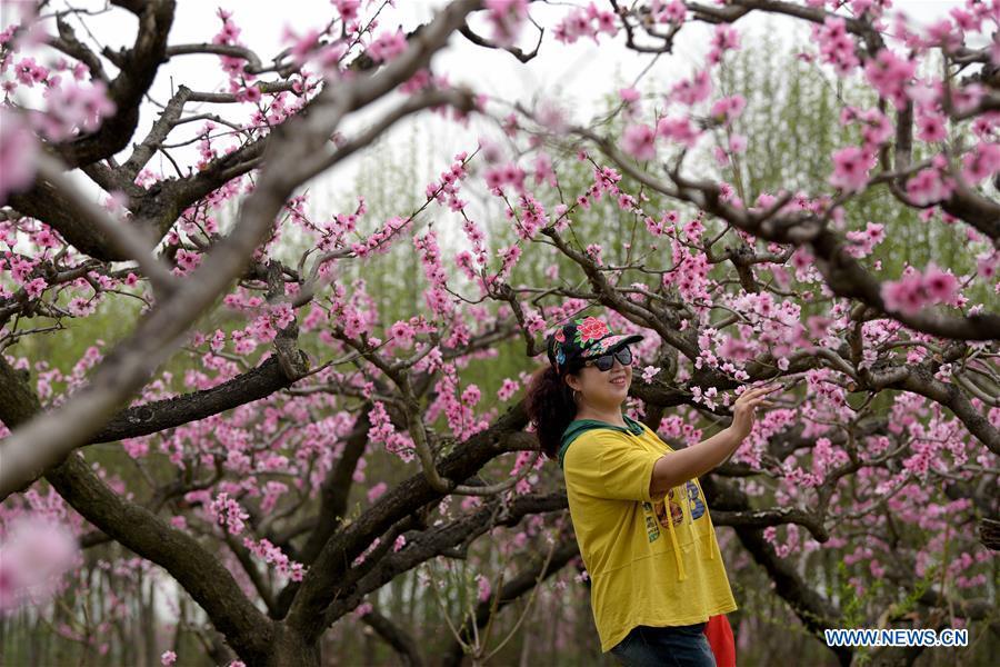 In pics: peach blossoms at peach garden in Xi'an