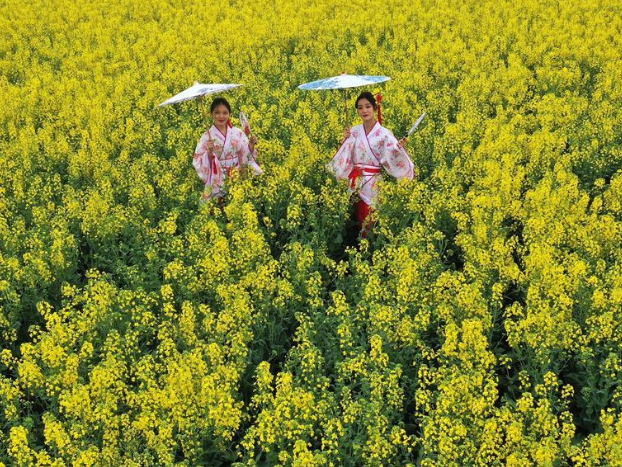 Tourists visit blooming cole flowers in Pingdingshan, Henan