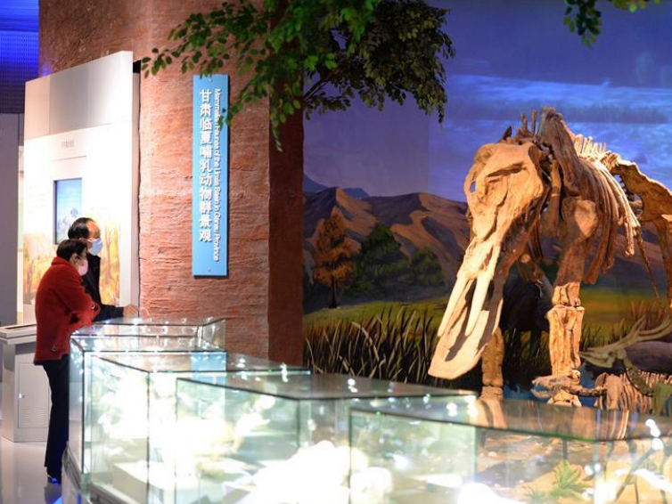 Anhui Geological Museum reopens in orderly manner