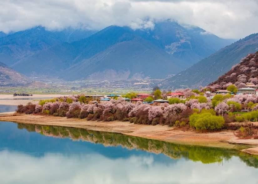 Tibet to start annual peach blossom festival