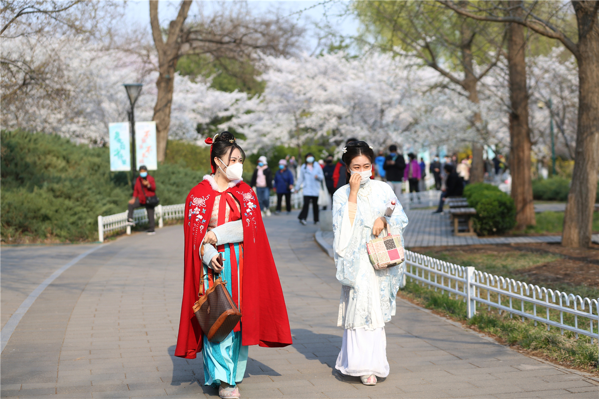 Visitors admire cherry blossoms under crowd control