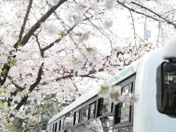 Blossoms add tenderness to bus stop in Shanghai