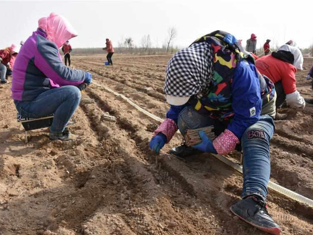 Farmers of Zhongning County start to get busy in spring ploughing