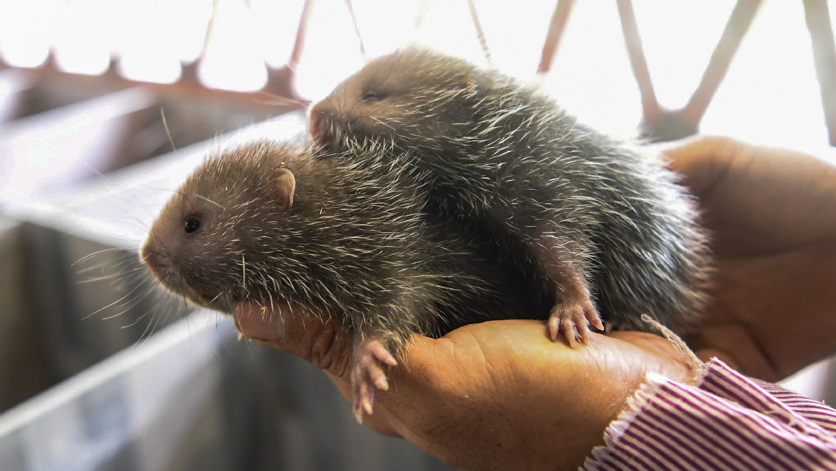 Ban tightens on wild animal consumption