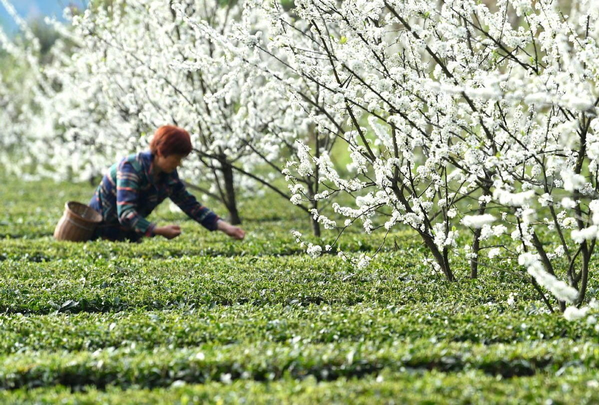 Hubei agriculture products in need of buyers