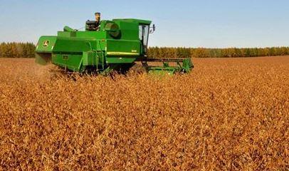 harvest (xinhua).jpg