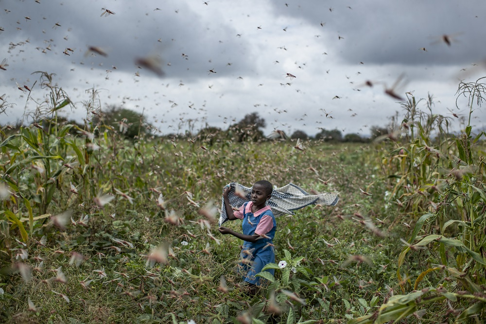 Intl community helps East Africa with locust swarms
