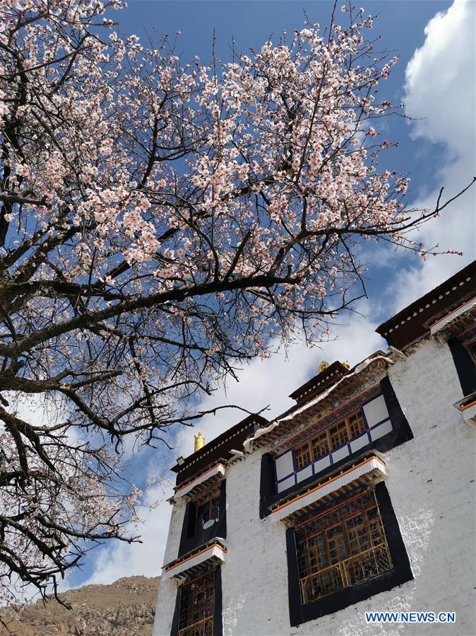 Spring scenery in Lhasa, Tibet