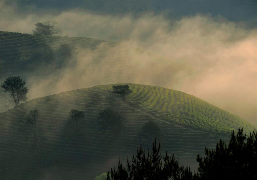 Scenery of Wuyi Mountain scenic spot, SE China's Fujian