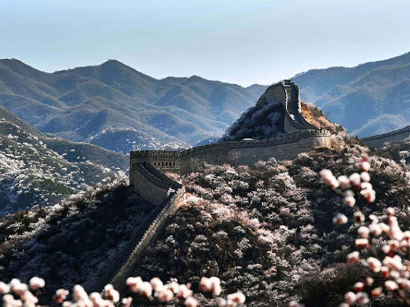 Flowers bloom at Shuiguan Great Wall as spring arrives