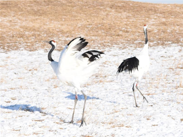 'Home of red-crowned cranes' to offer free admission for medics