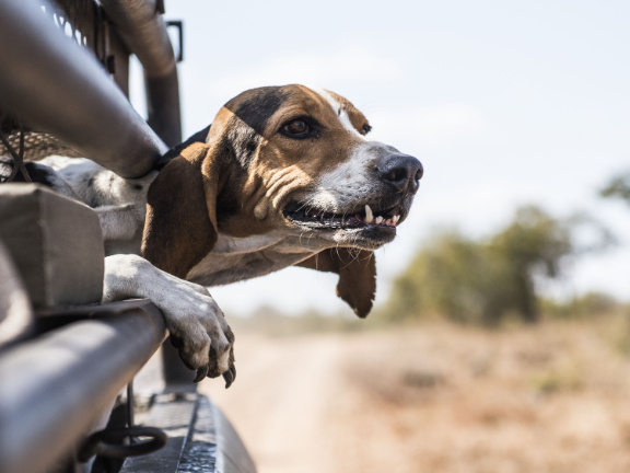 Animal shelter personnel brave lockdown with animals in South Africa